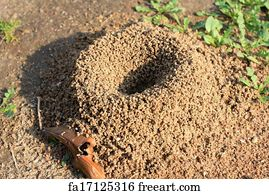 Free art print of Sand anthill, active nest with ant
