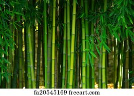 Free Green Bamboo Art Prints and Wall Artwork | FreeArt