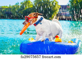 Free Art Print Of Dog At Beach Dog Plays With Sunglasses