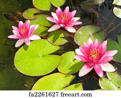 Free art print of beautiful blooming red water lily lotus flower art print beautiful blooming red water lily lotus flower with green leaves in the pond mightylinksfo