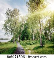 Free Art Print Of Beautiful Forest Landscape Nature Background Deep