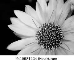 Free black and white art prints and wall art freeart black and white art print black and white flower mightylinksfo