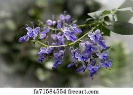 Free Blue Vervain Art Prints and Wall Artwork | FreeArt