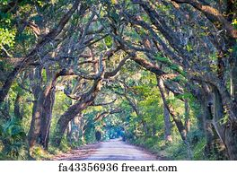 free art print of botany bay plantation spooky dirt road