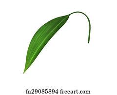 Free Broad Leaf Art Prints and Wall Artwork   FreeArt   240 x 195 jpeg 5kB