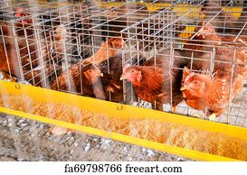Free Battery Cage Art Prints and Wall Artwork | FreeArt