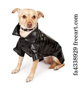 "chihuahua art print 8x10/"" Chihuahua dog art print rescue adopt print"