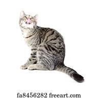 Free Art Print Of Pet Tabby Cat On White