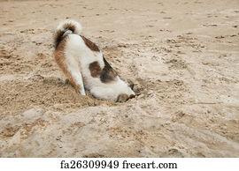 ostrich head in sand art print dog head in sand beach like ostrich shame and