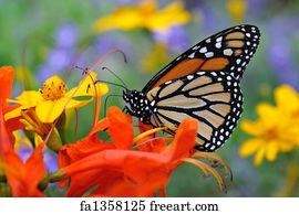 butterfly art print butterfly - 1000 Free Prints