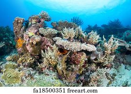 Free art print of Beautiful pink tropical reef. Beautiful ...