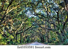 free art print of charleston sc dirt road forest botany