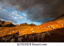 Free Herde Art Prints and Wall Art | FreeArt | {Herde 42}