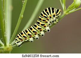 flowers butterflies dragonfly flower caterpillar - 1000 Free Prints