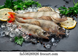 Free art print of fishes in tray for saling top view for Aromatic herb for fish