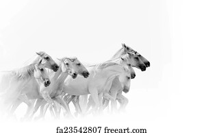 Free art print of Herd of horses running. Herd of horses ...