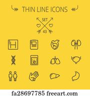 Free art print of Modern color thin line icons on a theme medicine human  internal organs