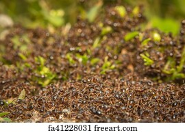 Free An Ant Hill Art Prints and Wall Artwork | FreeArt