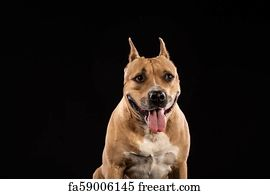Free Red Nose Pitbull Art Prints and Wall Artwork | FreeArt