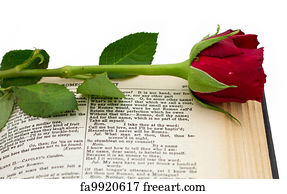 shakespeare rose sonnet