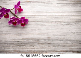 free art print of spa background with bamboo orchid spa background