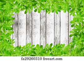 Free Sweet Woodruff Plants Art Prints and Wall Art FreeArt