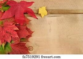 Free Art Print Of Vibrant Autumn Fall Season Leaves On Faded