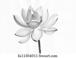 Free art print of lotus flower lotus flower in black and white watercolor painting of lotus flower mightylinksfo