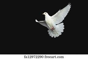 White Dove Holy Spirit